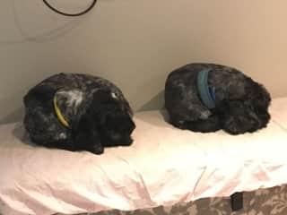 Twins sleeping.