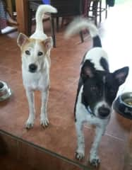 Jaq and Jill - My dogs in Bali