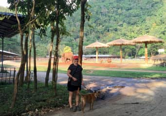Greta volunteer dog walking at the Elephant Nature Park outside of Chiang Mai. Elephant friend in the back!