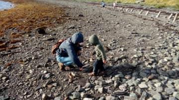 My nephew and I discovering an Irish beach's wildlife