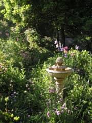 Our perennial garden