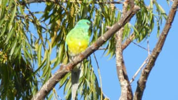 Recent trip to Stanthorpe and loved bird watching