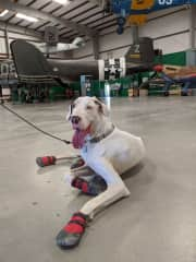 Visiting Pima Air & Space Museum nearby, pups welcome if you would like to go and take her too!