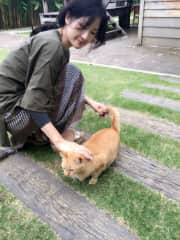 When we were traveling Chiang Mai, Thailand. We met this lovely cat, Chao.