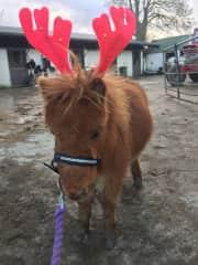 Jimmy in Christmas Spirit.