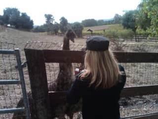 Emu at Koehler Winery