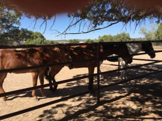Horses just hanging out