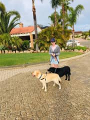 Walking Bindi and Custard Housesitting Mindarie October 2019