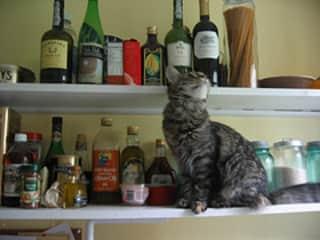 Our beloved cat Fig