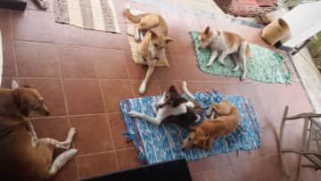 Most challenging housesit ever! 5 dogs in rural India.