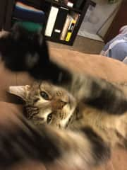 Gimli, the rascal cat who adopted me just prior to Nevada's passing. Gimli is proof that the universe has plans for you that differ than your own. Often called