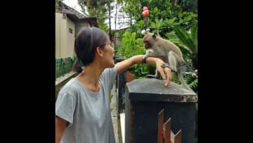 This poor monkey was chained up by some jerk who had a lot of wild animals chained in his backyard in Indonesia.