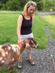 Chrissy the goat