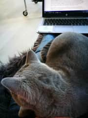 Trying to work with Ruca on my lap :-)