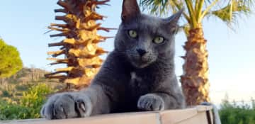 Spikey is originally from St. Martinique. Rescue-cat living now in France.