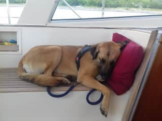 Kahlua on board yacht I was helping on through the rivers and canals summer 2018