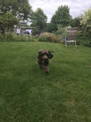 100 foot Back garden with Daphne