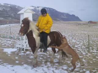 On my farm with my ridgeback and horse.... playing in the snow.
