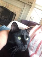 Lap cat. He has the green collar, not visible in this photo.