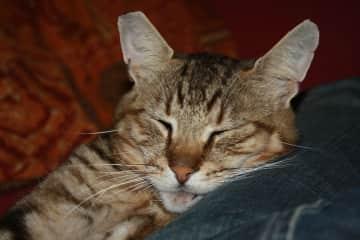 Morris, our cat