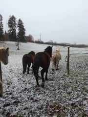 Our poneys