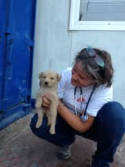 Stray puppy found on Sicilian dock.