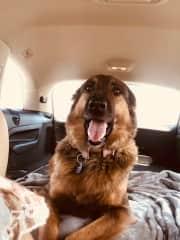Bear on road trip to Abu Dhabi