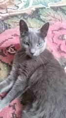 That's my cat Bajana
