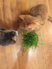 The boys have some cat grass