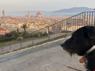 A view even a dog can't resist! -w/Banksy @Firenze