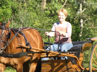 working with a friends horse, training it to the harness and cart.
