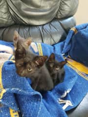 My little foster friends for 2 weeks before they were adopted to loving homes