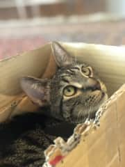 Captain loves cardboard boxes! He loves to chew on them and snuggle in them!