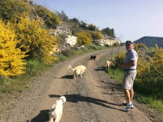 Byron and I walking the 5 dogs in Limassol, Cyprus Conservation Area