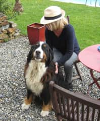 Mona with Pilou (Berner Sennen) in SW France
