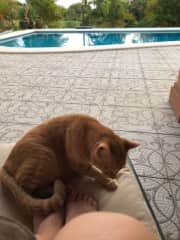 Snap in Pedasi, Panama housesit Dec 2020; common for expats to adopt stray cats. They are very timid and take weeks to warm up to new people. It was a Christmas miracle he sat by me!