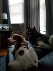 This is also Kaiju (on the left) with a dog that we house sit for in the past!