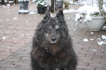 Cara, our dog, who passed away with 16 years.