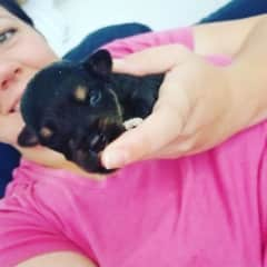 Helping with neonate puppies at the rescue.