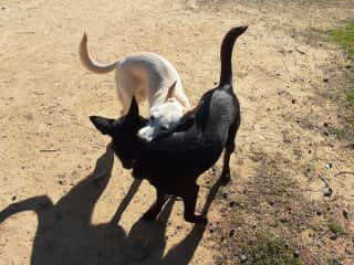 Sumi (dark) and Willow (light) express their love for each other.