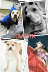 Licensed therapy dog, meeting people is his thing. FB page Towpath the Wonder Pup