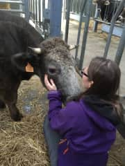 With Shadow (rescued from the meat industry) at a sanctuary in Belgium