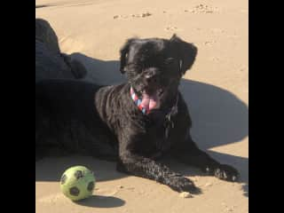 Favourite ball at our local beach