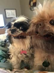 London and Sydney having a chewie tug of war