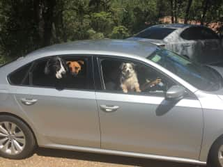 Going for a ride in my car. I love dogs!! I have been raised with dogs and continue to have dogs through raising 4 kids. On our ranch we had 2 horses, 1 llama, 60 chickens,  4 dogs, 2 bunnies and 10 gold fish.