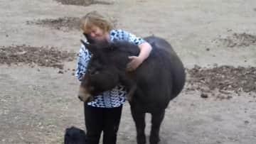 Wendy - the greatest mule Ive ever met.