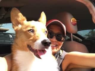 Bumi the Corgi my grand pup. I do his IG Bumi_the_corgi plus his TicTok. I take him few days a week when am not traveling.