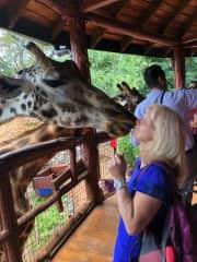 Beautiful giraffes in Nairobi