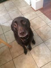Remi waiting on a treat! TREAT PLEASE!