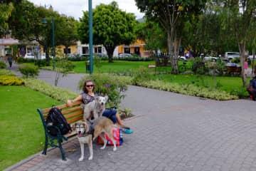 Lucie with Honi and Milu in Quito, Ecuador pet-sit 2017